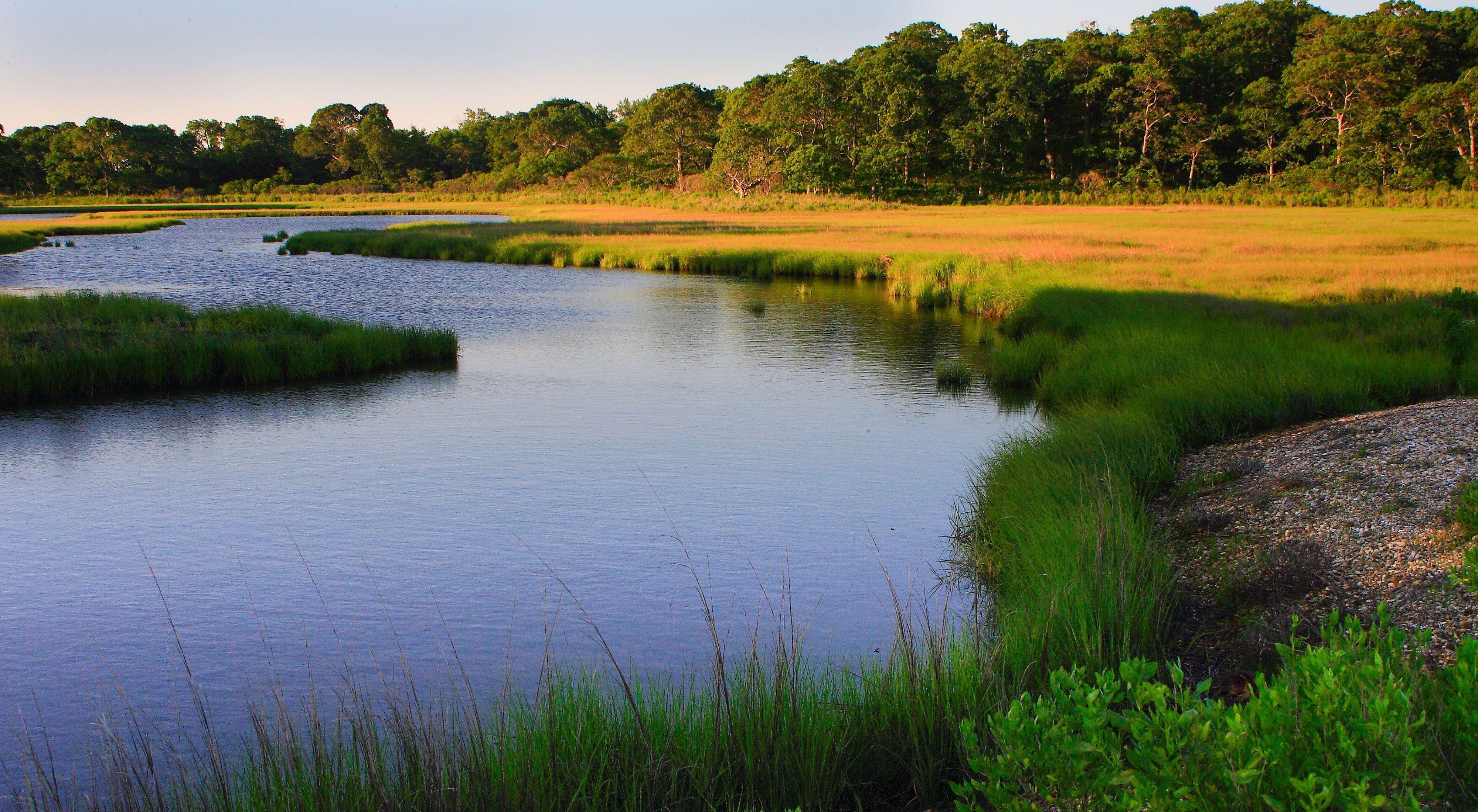 View of a winding river through a salt marsh lined by green and yellow shrubs.