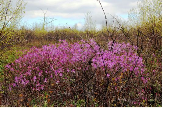 A pink flowering bush stands out in a barren landscape.