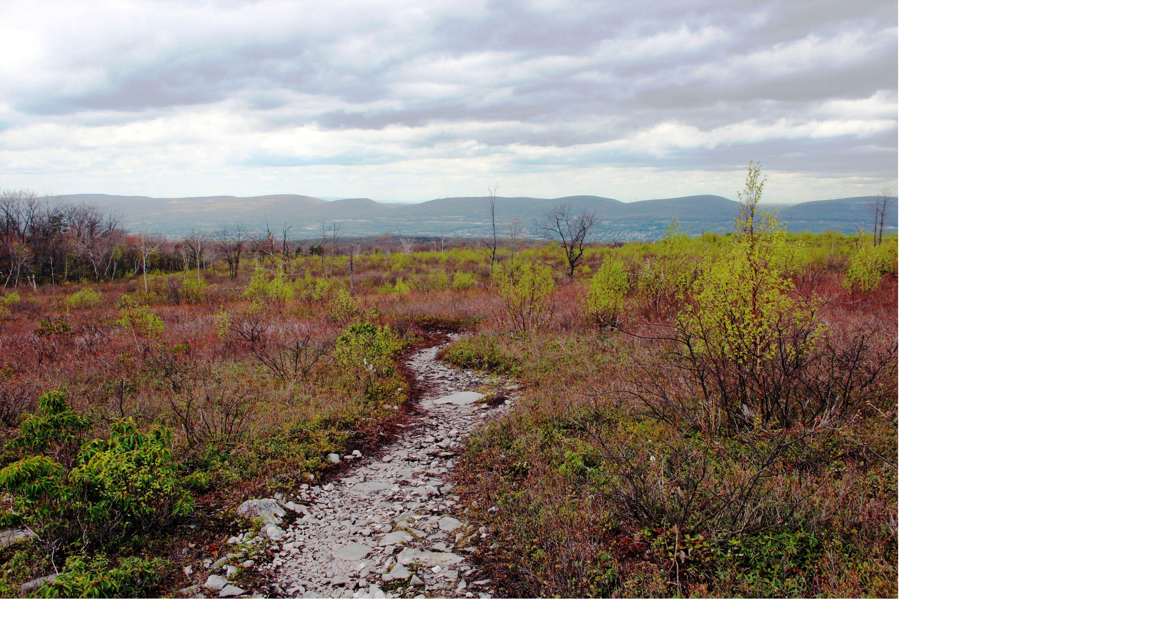 A dirt path leads through a colorful barrens landscape.