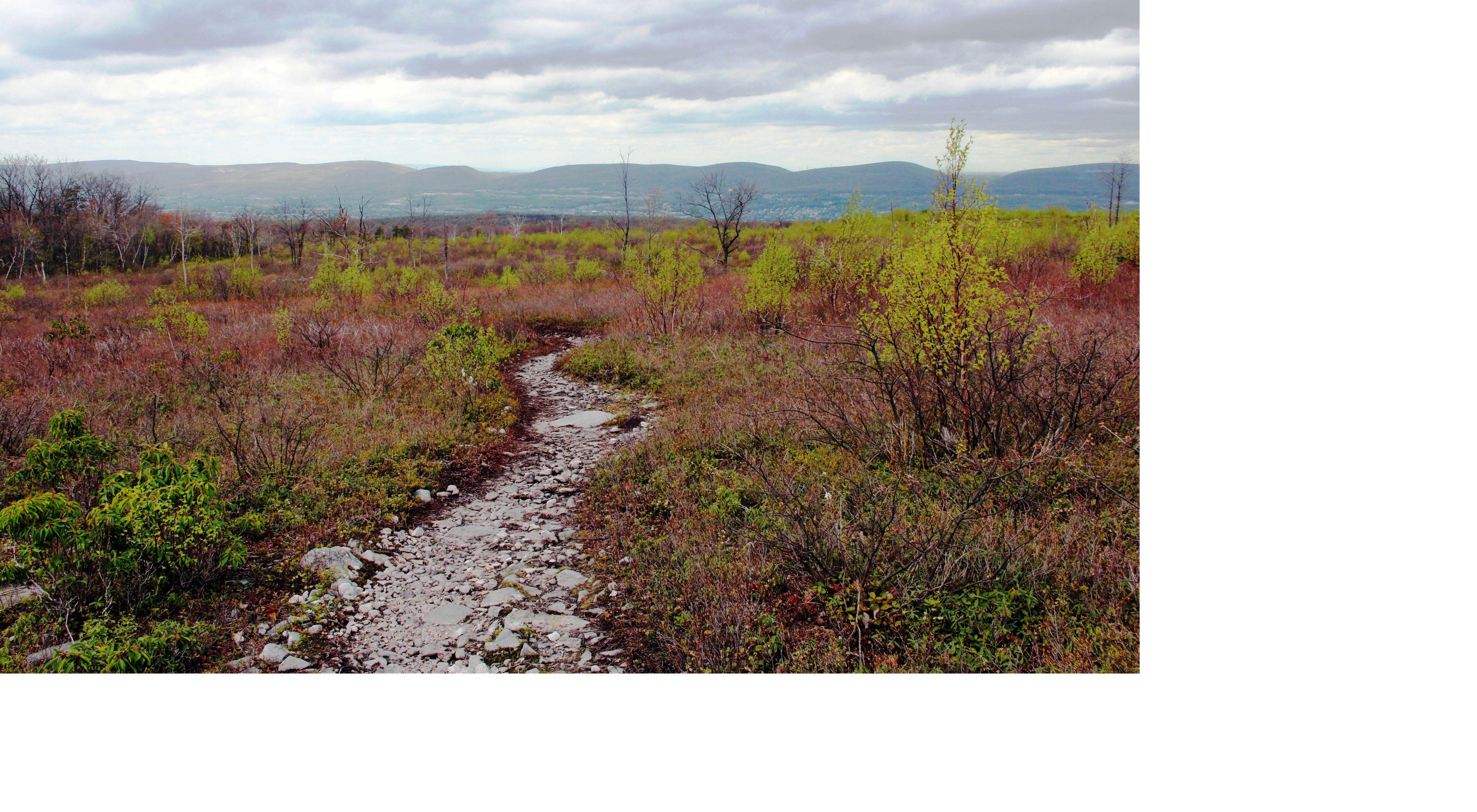 A dirt path winds through a colorful barrens landscape.