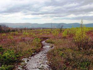 A dirt path winds through a barrens landscape.