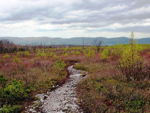 A gravel path winds through a barrens landscape.