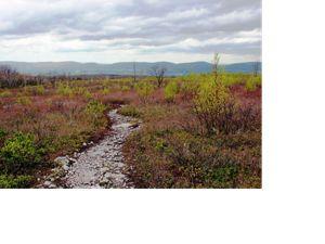 A gravel path winds through a barrens landscape.