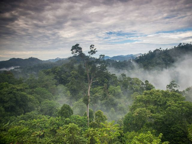 Water vapor and mist rise from tropical rainforest in Indonesia.