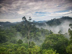 Cloudy sky over misty rainforest