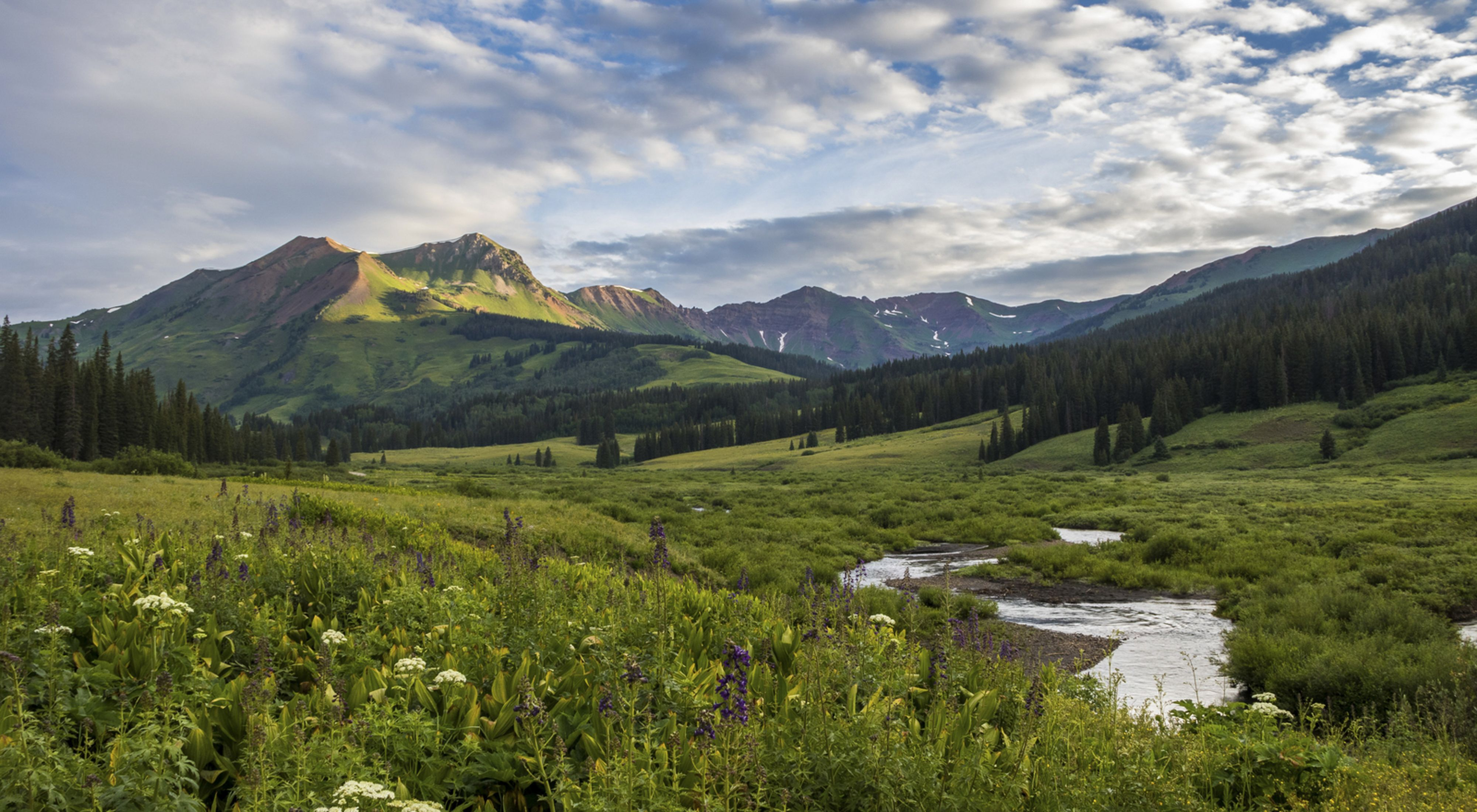 Photo of a high alpine meadow in Colorado's East River basin.