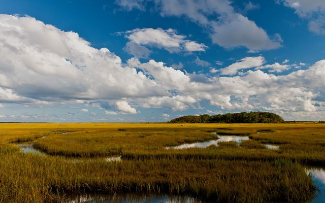 White clouds float in a blue sky above a wetland on Virginia's Eastern Shore. Water winds in narrow paths through the grass.