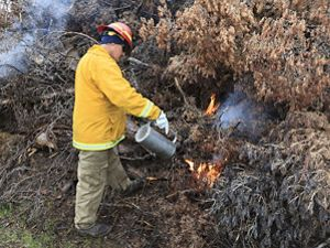 Man in yellow burn clothes uses drip torch on tree.