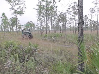 A swamp buggy tours the longleaf pine and wiregrass landscape of Disney Wilderness Preserve in Florida.