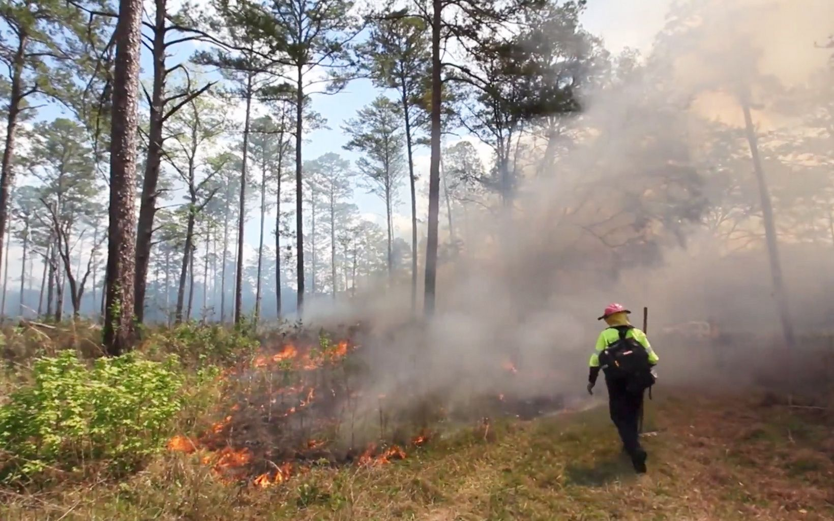 The episode describes the process of controlled burning at regular intervals to keep habitats healthy.