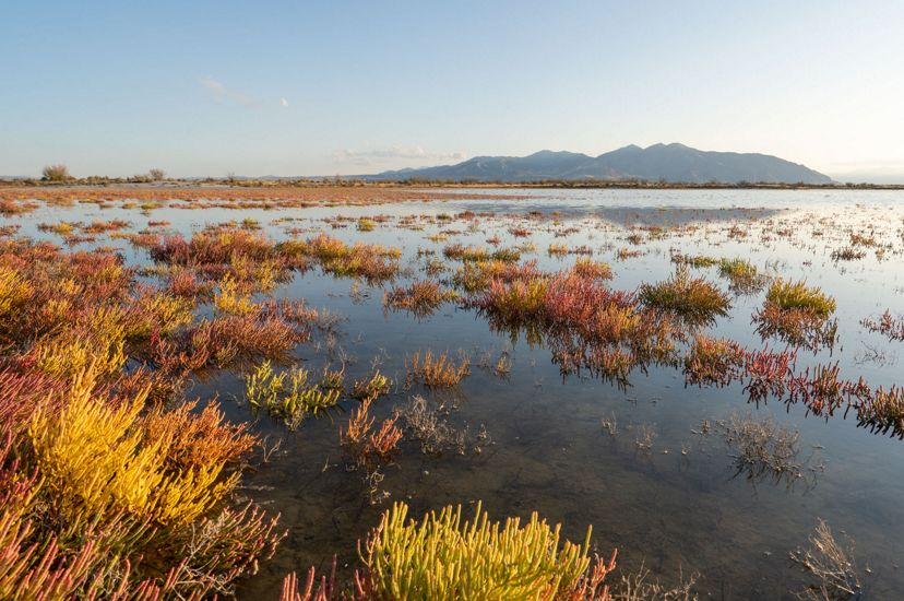 A broad marsh with brown grasses.