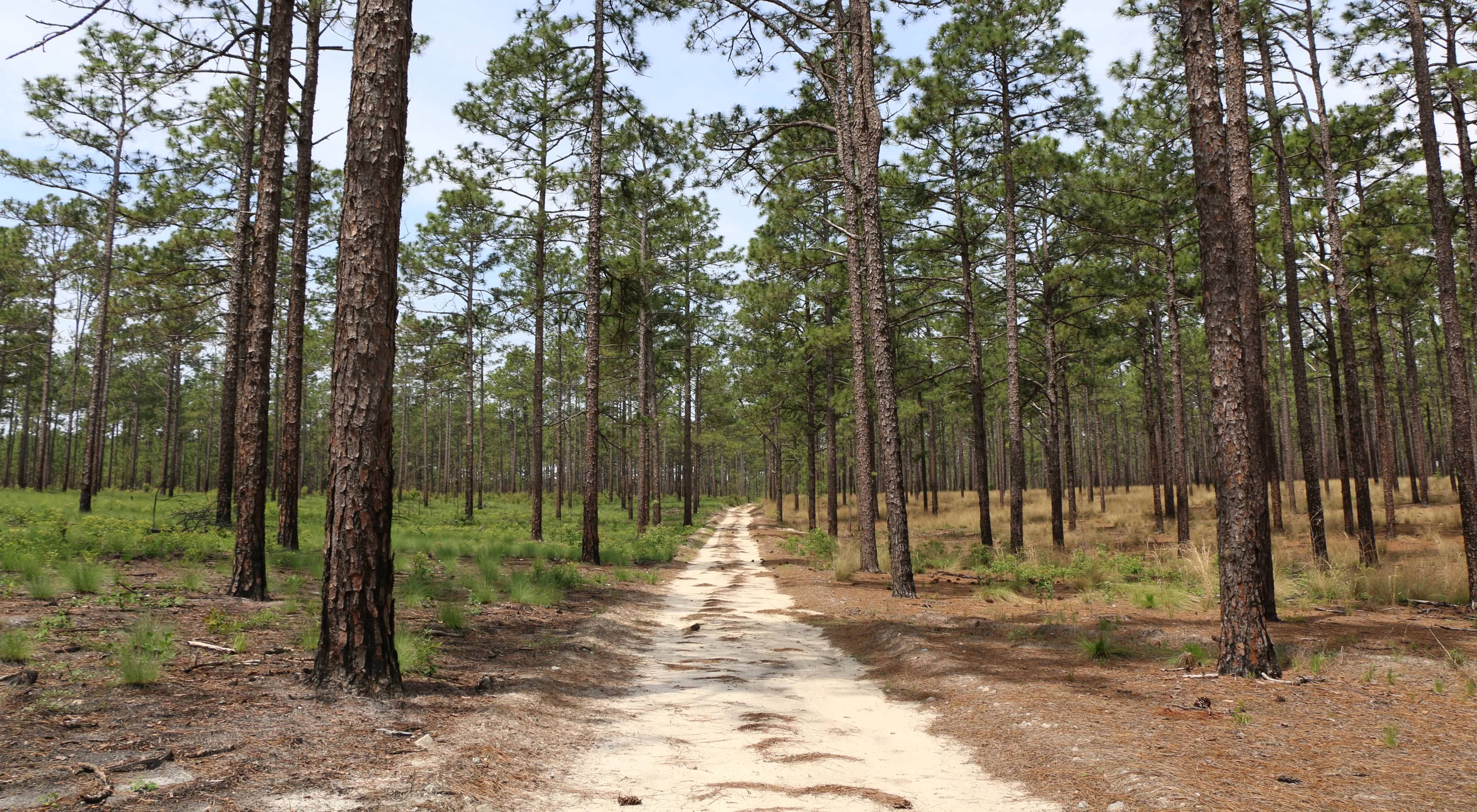 The sandy road that winds through Calloway Forest Preserve.