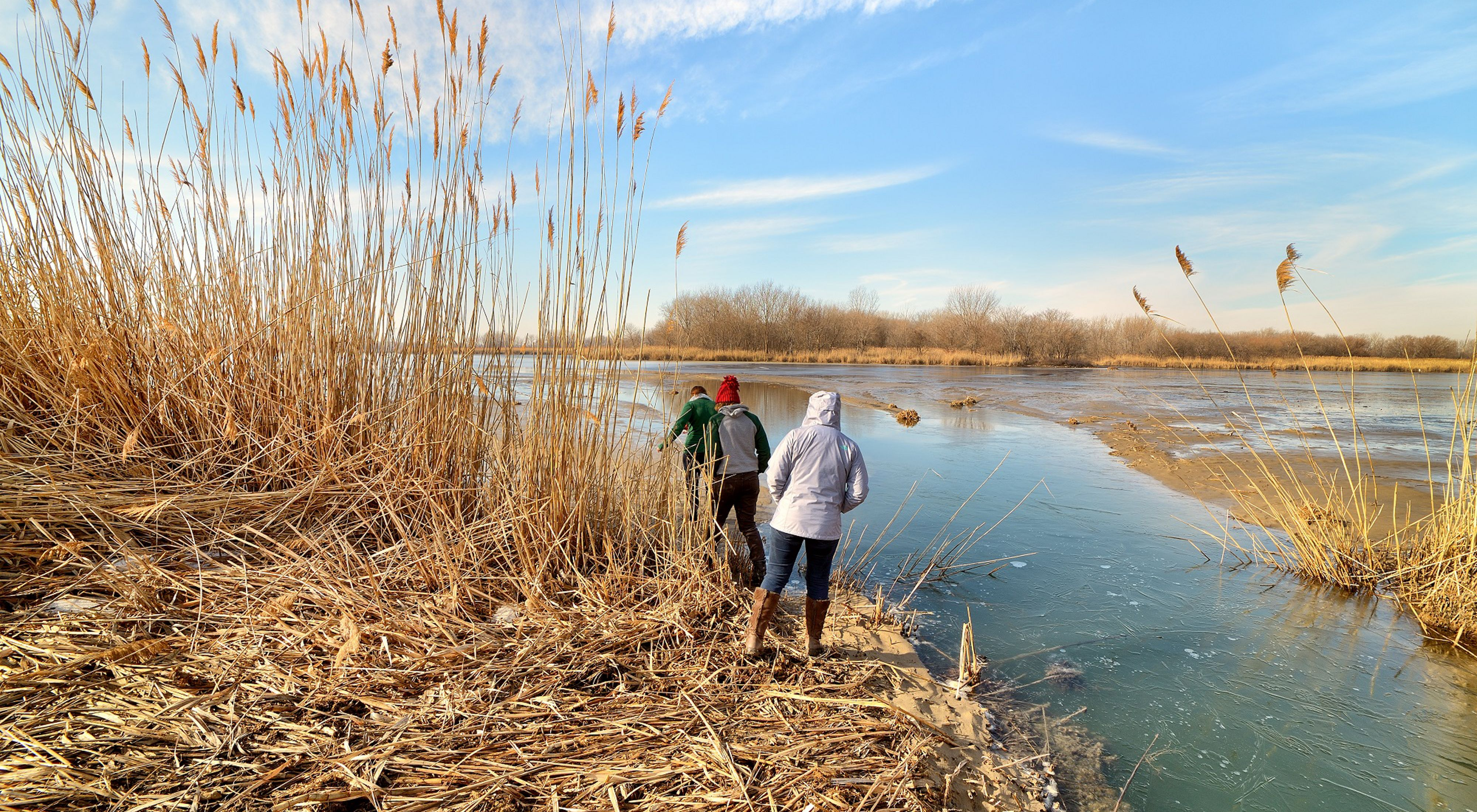 Three people viewed from behind, walking along the water line in a marsh in winter, with tall brown marsh grasses growing up to the shore.