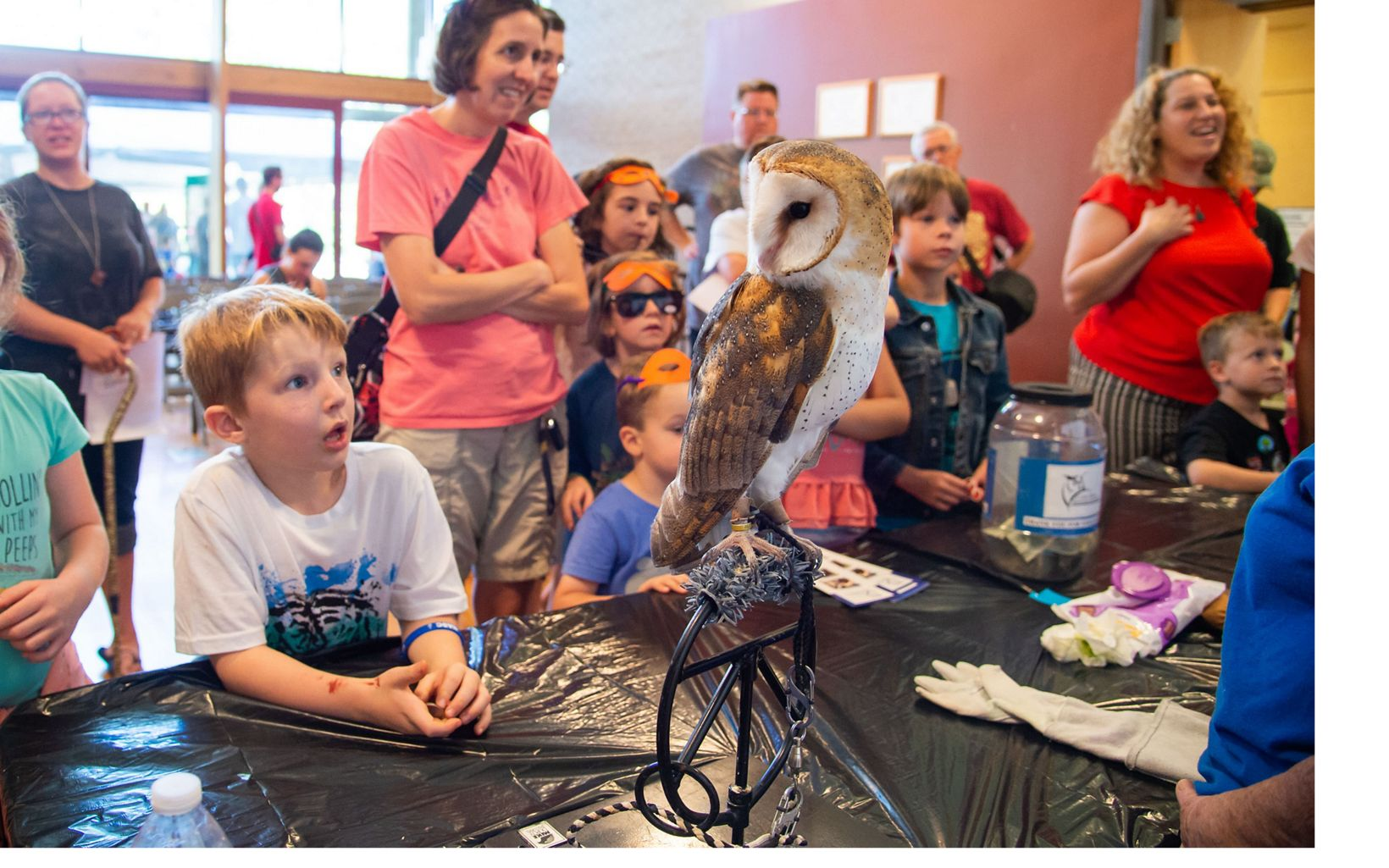 Birds of Prey at Fire in the Pines