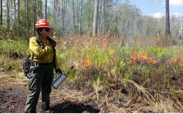 TNC's Chelsea MacKenzie contacts a fellow member of the burn crew by radio during a controlled burn at Disney Wilderness Preserve.