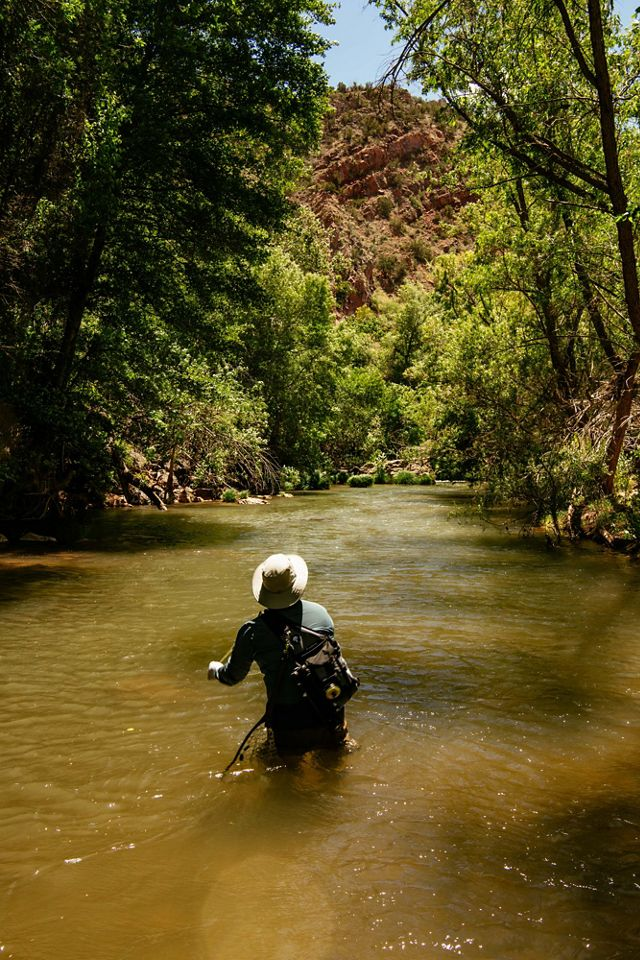 Fly fisherman in the Verde River