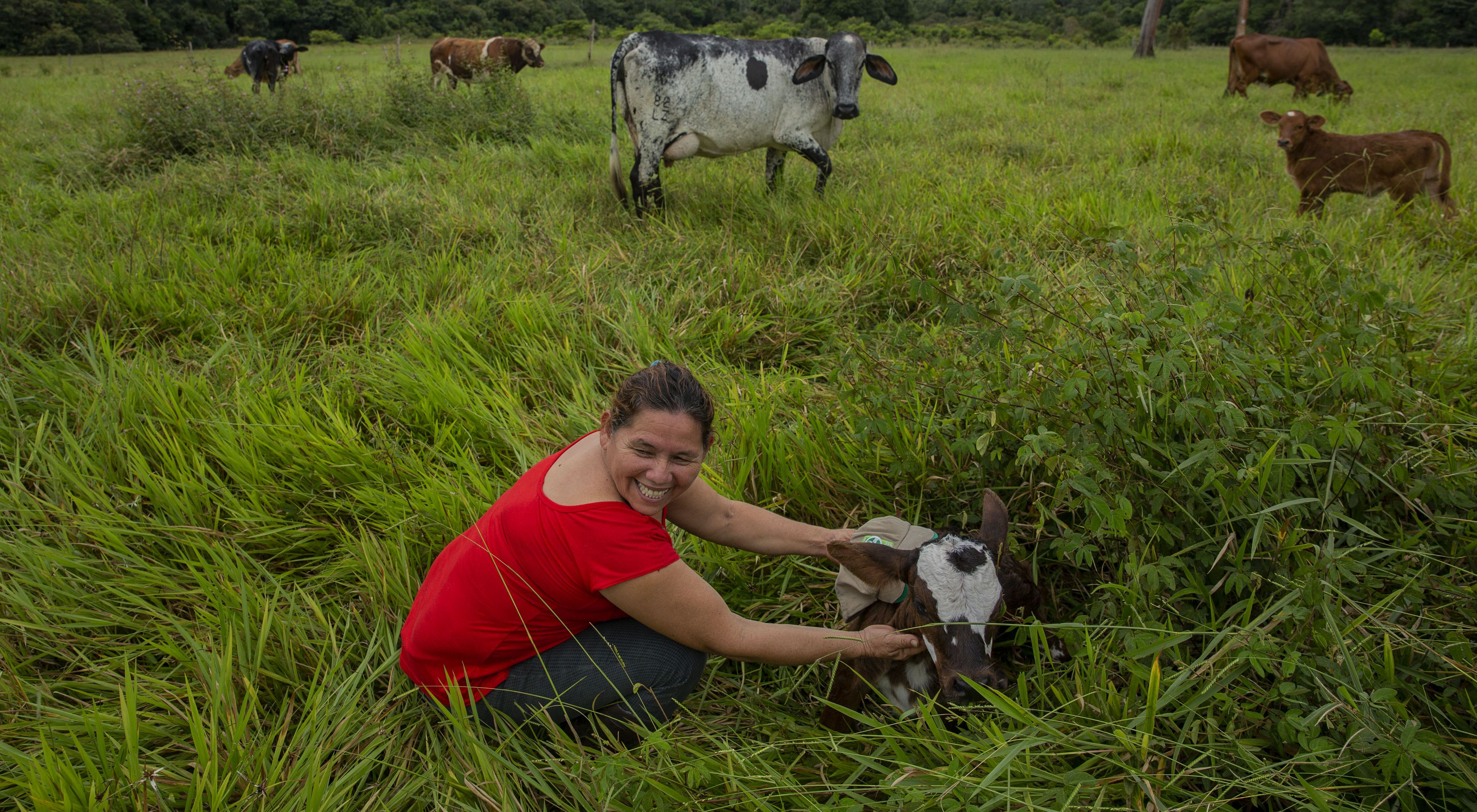 Mercedes Murillo Gutierrez attends to cows on her farm in Meta, Colombia
