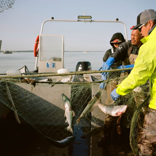 Two men and one boy hold a net stretched across a boat with several silver-colored fish in the net
