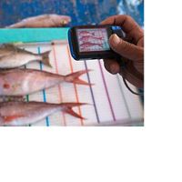 Fish being measured after being caught by the fishermen on Tetap Setia. Kema, North Sulawesi, Indonesia.