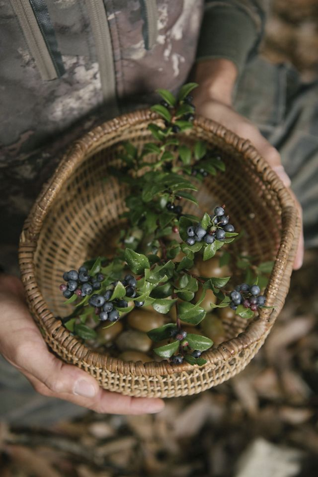 Hands hold a woven basket with huckleberry branches and berries inside.