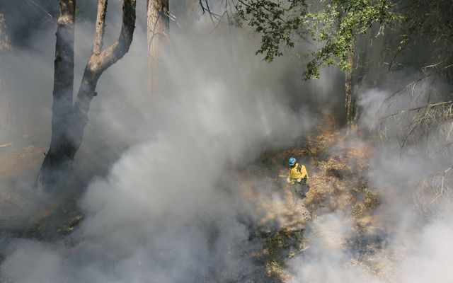Aerial view of a firefighter walking among the forest and smoke during an Indigenous cultural burn.