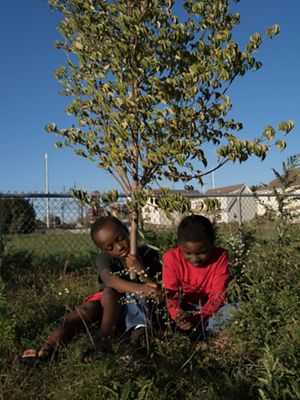Two boys sit near a small tree in a backyard in Bridgeport, Connecticut.