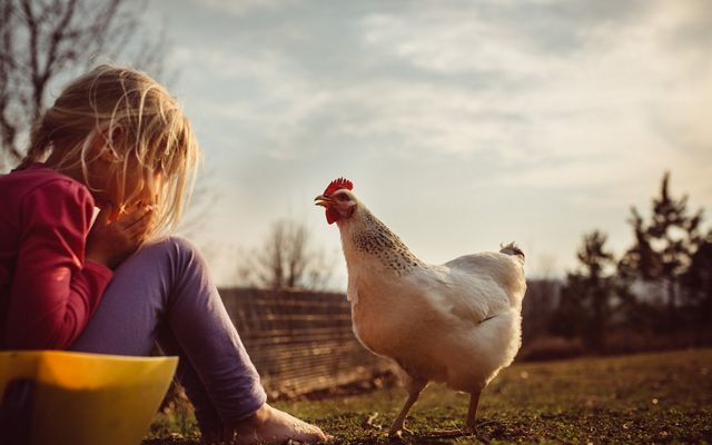 A seated girl faces a chicken with a smile on her face and the chicken looks back at her.