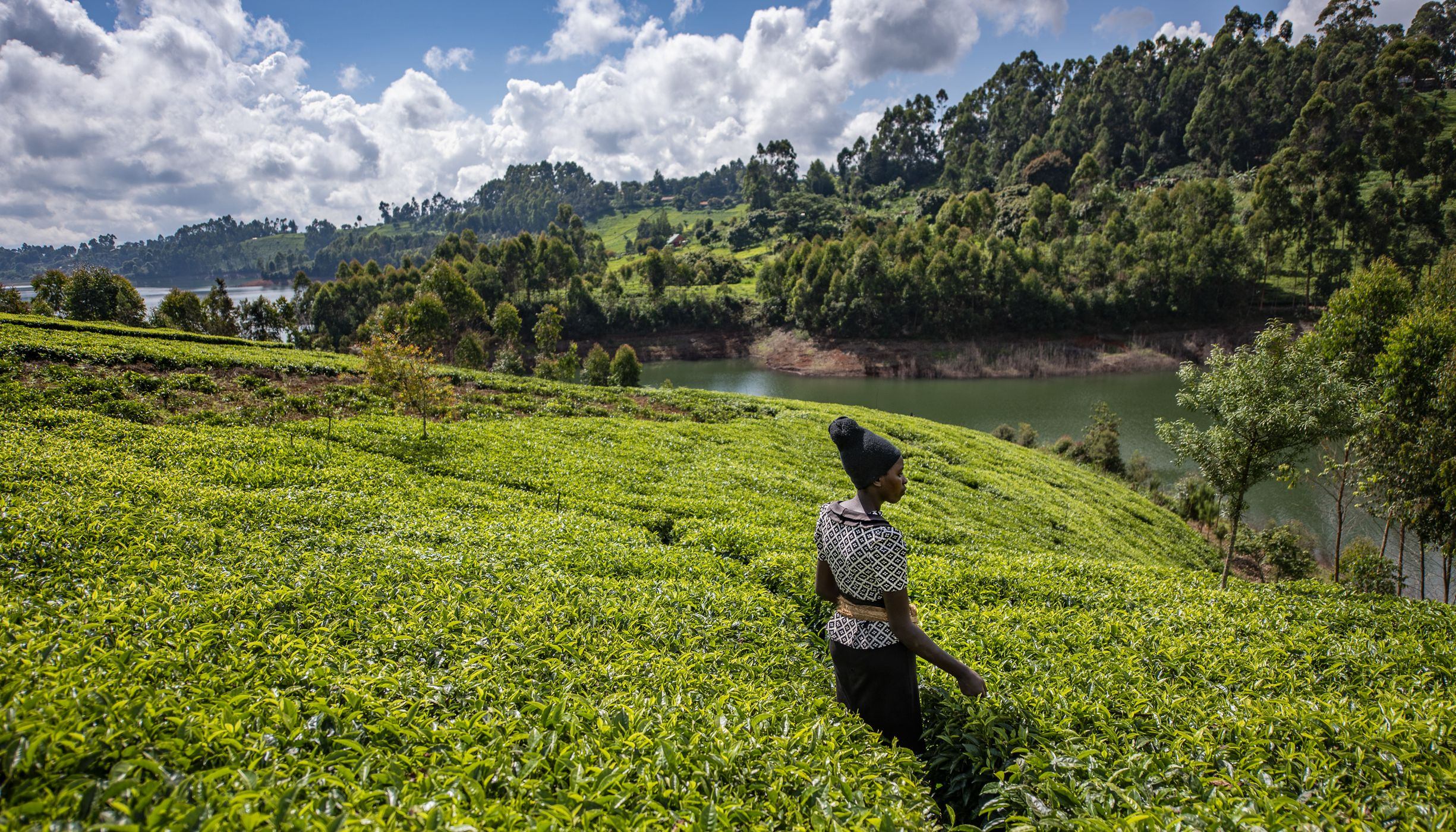 A woman stands amid a lush tea farm near a reservoir.