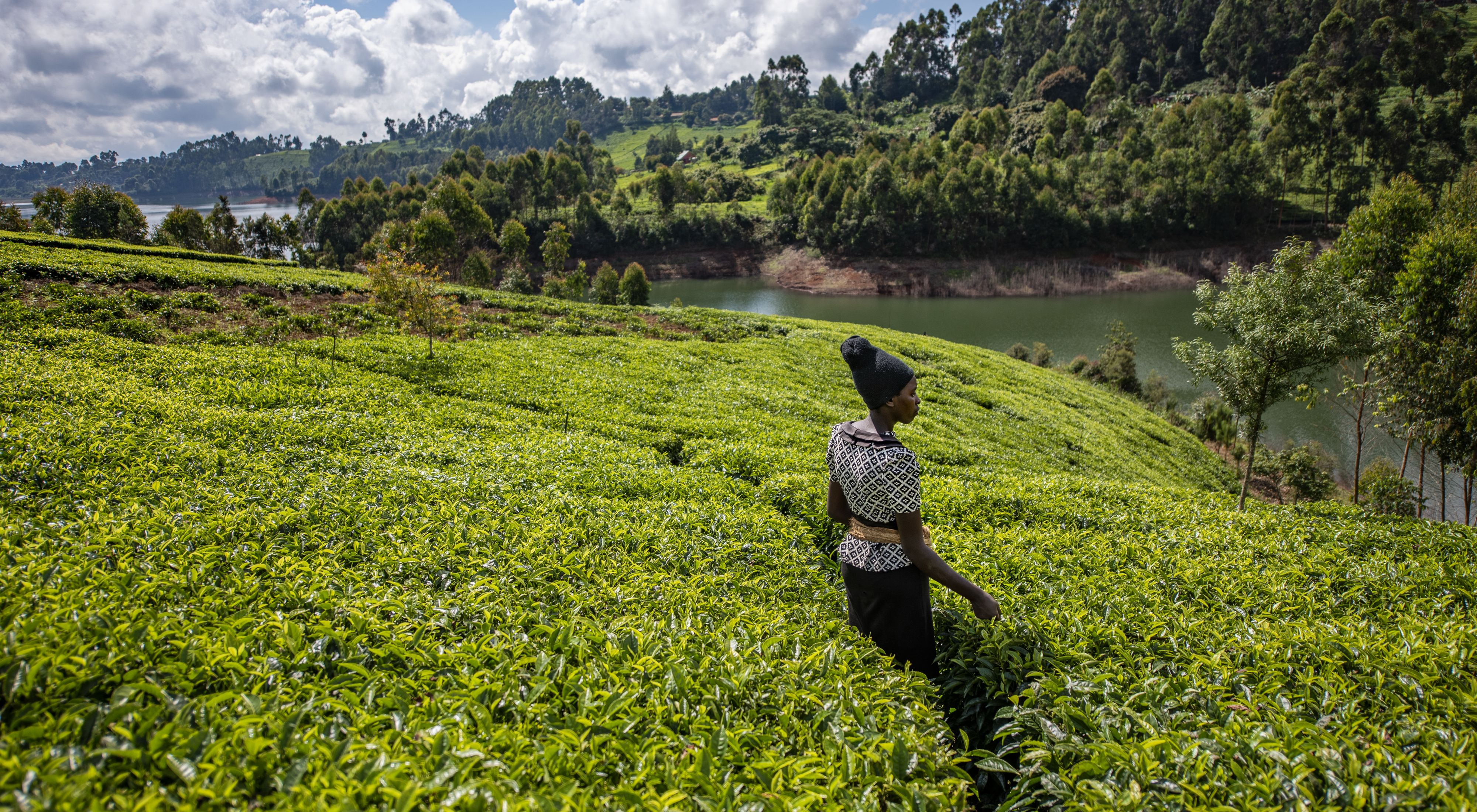A woman stands in the midst of a lush tea farm near a reservoir