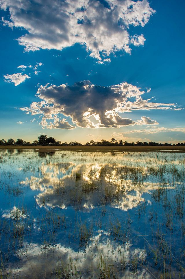A blue sky with puffy white clouds reflects in the still water of the Okavango delta.