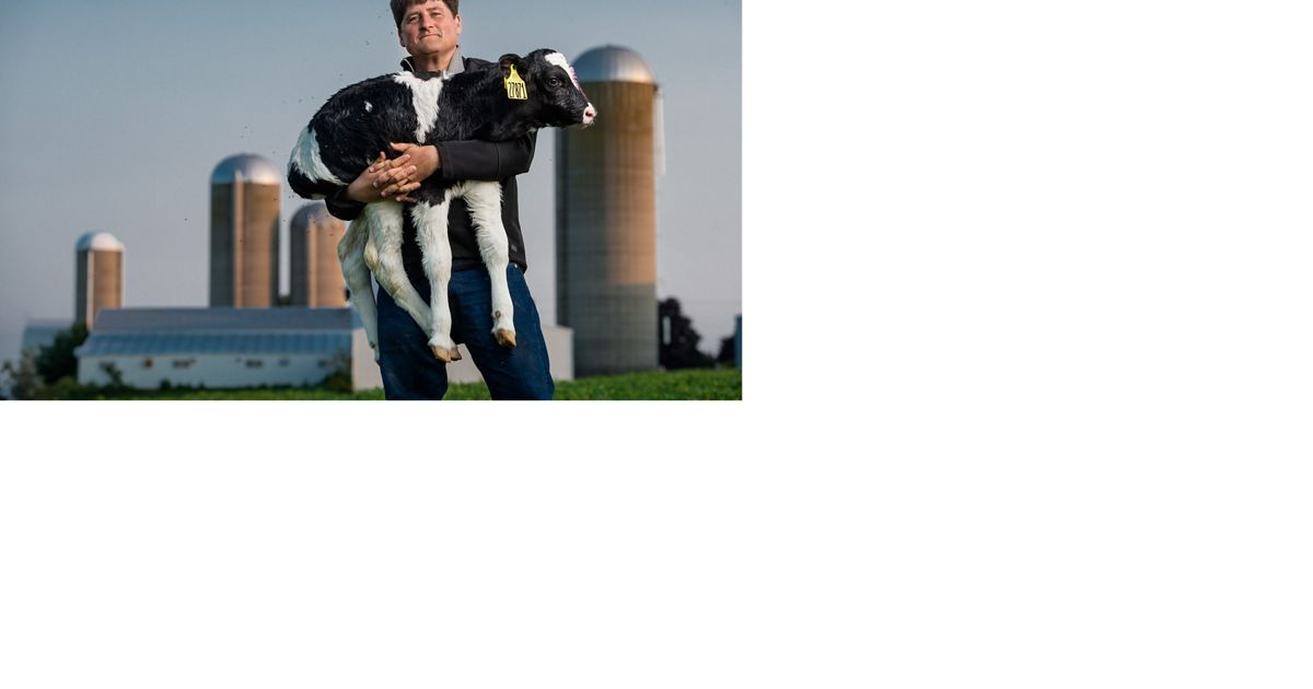 A Wisconsin dairy farmer holds a calf