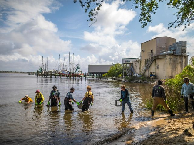 GulfCorps workers line up from the shore into the water, passing concrete blocks