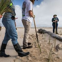 Members of the Conservation Corps on Round Island off Gulfport, Mississippi, planting sea oats, helping to bring life to this manmade island created when the area of dredged. This project is also supported by The Nature Conservancy. Photograph by John Stanmeyer