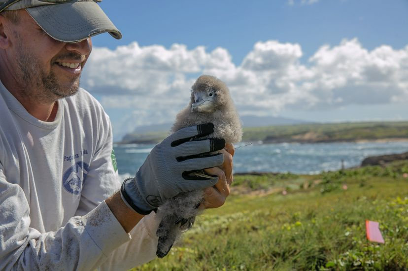 man holds fuzzy gray chick