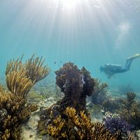 searches for loose fragments of staghorn coral in Dry Tortugas National Park.