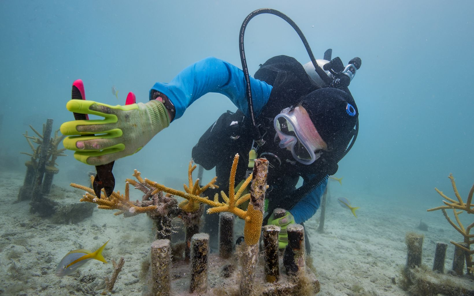 A diver cuts a piece of coral