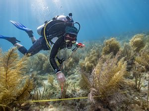 a graduate student, takes depth measurements of coral reefs.