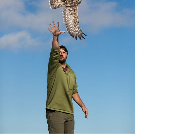 A man releases a peregrine falcon into the blue sky