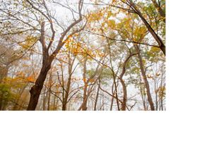 Treetops in fall color