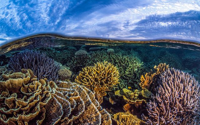 coral reef in Australia