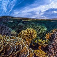 The dense and beautiful coral gardens of Coral Bay, Western Australia.