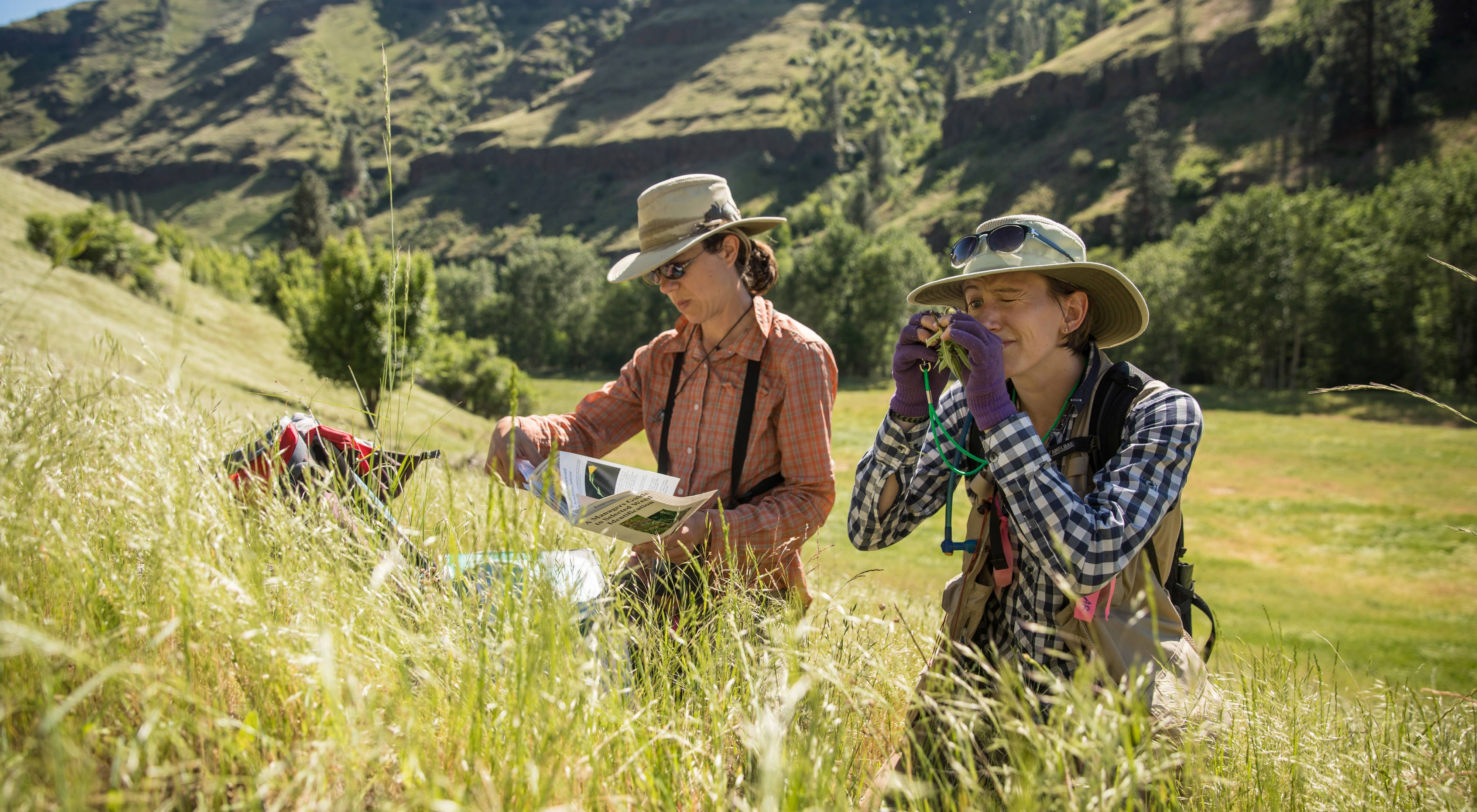 TNC scientists Heidi Schmalz (left) and Allison Rossman lead a group of volunteers and researchers as they identify invasive weeds on the Zumwalt Prairie Preserve, Oregon.