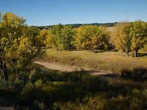 Cottonwood trees begin to show their fall colors along the Cheyenne River in South Dakota.