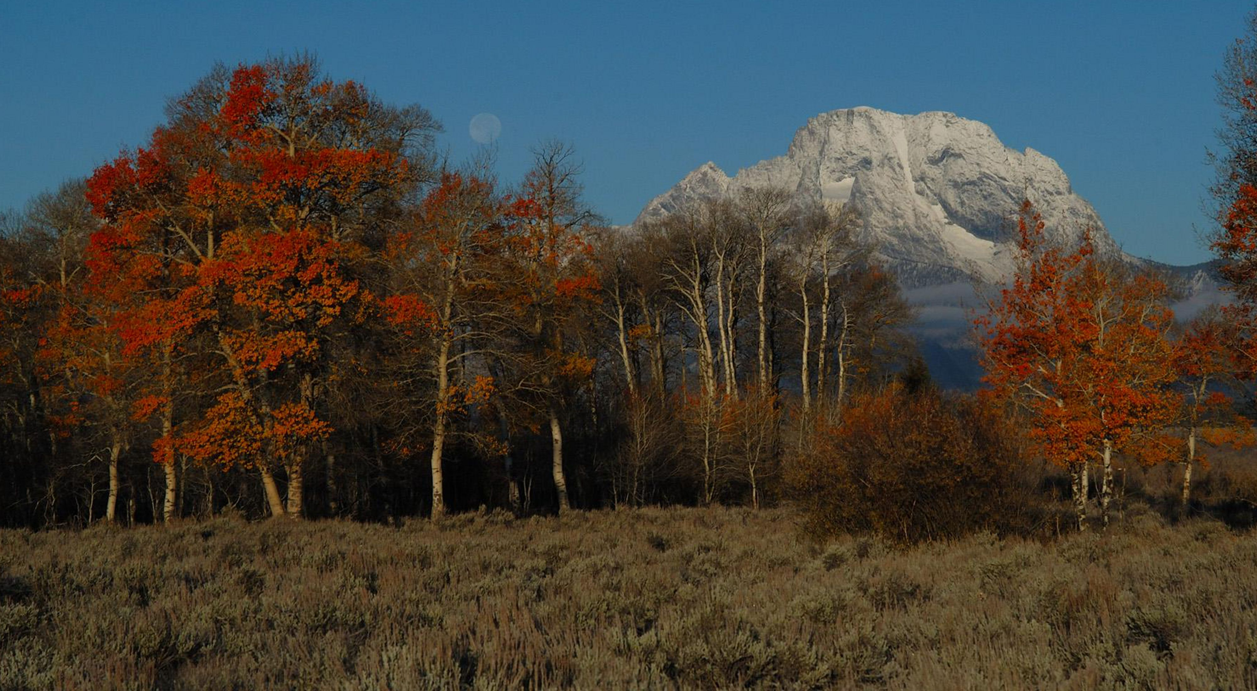 Red leaved trees with a mountain in the background.
