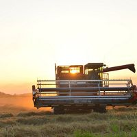 Combine at sunset.