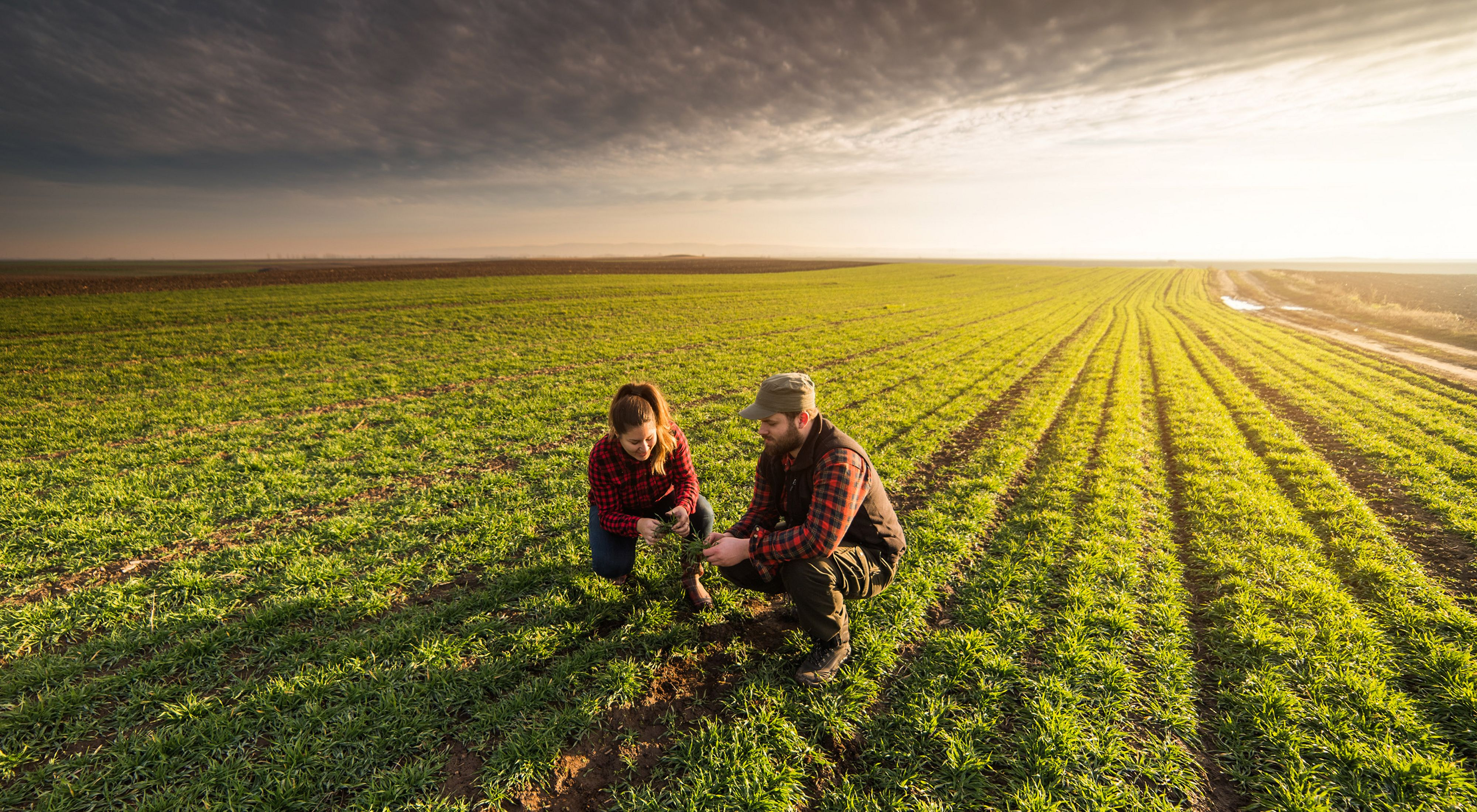 A man and a woman crouch in an agricultural field at sunrise, looking at the soil.