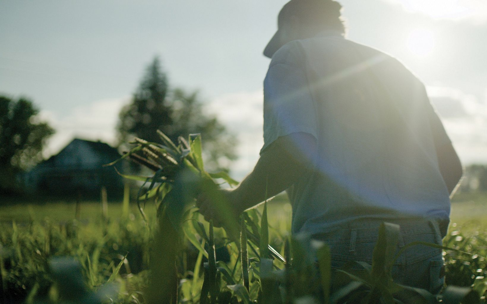 Still image from Wasted! The Story of Food Waste