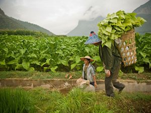carries a basket made of bamboo which is used to harvest produce and carry it to market in Yunnan Province, China.