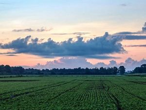 A field of green row crops stretch out under a colorful sky.