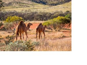 Martu rangers are monitoring the health of waterholes on country, in western Australia.